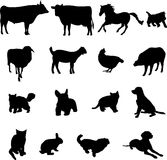 Livestock and poultry. Animals have been domesticated and is also a loyal friend of the people Royalty Free Stock Photo