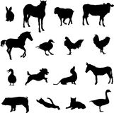 Livestock and poultry Stock Photos