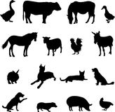 Livestock and poultry Stock Photo