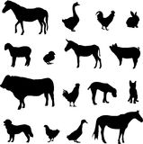 Livestock and poultry Royalty Free Stock Photography