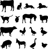 Livestock and poultry. Animals have been domesticated and is also a loyal friend of the people Royalty Free Stock Image
