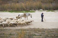 Livestock Stock Photography
