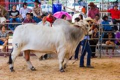Livestock Show 2012 Stock Image