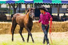 Livestock Show 2012 Royalty Free Stock Images