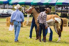 Livestock Show 2012 Royalty Free Stock Photography