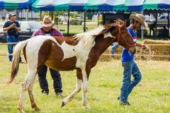 Livestock Show 2012 Stock Photo