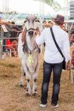 Livestock Show 2015 Stock Photo