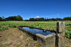 A livestock water trough Royalty Free Stock Photo