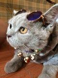 Livet av pi: royaltyfri foto