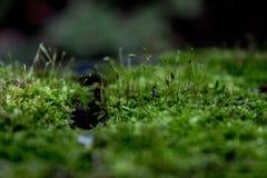 Livet på stubben Fotografering för Bildbyråer