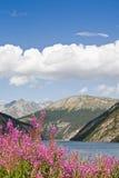 livignio λιμνών Στοκ εικόνες με δικαίωμα ελεύθερης χρήσης