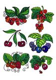 Living berries Royalty Free Stock Images