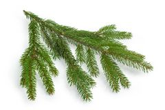 Free Living Branch Of Spruce On A White Background Stock Image - 132627051
