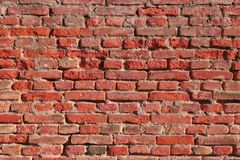 Living bricks background. Color of 2019 year. Modern trendy texture for design. Background of red bricks. Brick wall texture royalty free stock photos