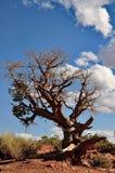 Living bush Royalty Free Stock Images