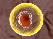 Living cell Royalty Free Stock Photos