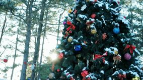 Living Christmas tree decorated with Christmas balls, toys and garlands, stands in the open air. In forest stock video footage