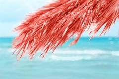 Living coral color concept of the year palm royalty free stock photo