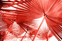 Living Coral color of the year 2019. Main trend natural and authentic concept royalty free stock photography