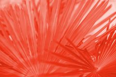 Living coral palm texture. Living coral color of the year 2019 palm leaves. Textured background of a tree royalty free stock photography