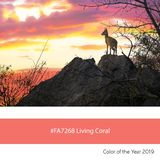 Living Coral Color of the Year, Steenbok at sunset royalty free stock photo