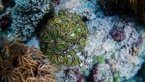 Living coral. At Komodo royalty free stock photos