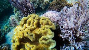 Living coral. At Komodo stock photos