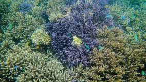 Living coral. At Komodo stock photo