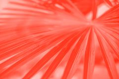Living coral leaves texture. Living coral palm leaves. Pantone color of the year royalty free stock image