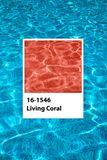 Living Coral Swimming pool stock images