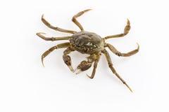 Living crab Royalty Free Stock Photo