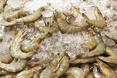 Living crawfish Stock Images