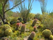 The Living Desert. Cactus landscape at the Living Desert, Palm Springs, CA stock photos