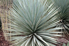 The Living Desert of the Southwest USA Stock Images