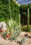 Living Desert Zoo Gardens State Park Stock Image