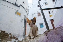 Living free on the streets of Tetouan, Morocco. Cats living free on the streets of Tetouan, Morocco Stock Image