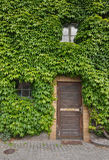 Living the Green Life. House covered in green leaves. Symbolizing how to live environmentally friendly Stock Image