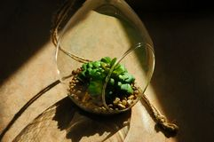 Living green plant. In small glass between gravels. royalty free stock images