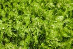 Living green sea Stock Photo