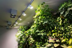 Living green wall with flowers and plants, vertical garden indoors royalty free stock images