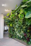 Living green wall with flowers and plants, vertical garden indoors royalty free stock photo