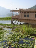 Living in Kashmir. Floating house on the boat in dal lake in srinagar, Kashmir in the middle of lotus flower plants royalty free stock photo