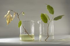 Living and lifeless. Sprout laboratory glassware stock photos