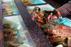 Living marine cancer in hand restaurateur Stock Image