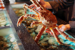 Marine crab in hand restaurateur Royalty Free Stock Image