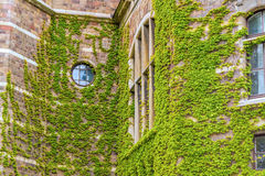 Living in nature - Green ecological building. Green ecological window (Horizontal View Stock Images