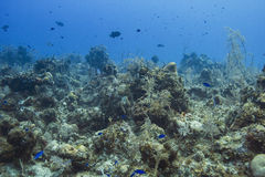 Living ocean Royalty Free Stock Photo