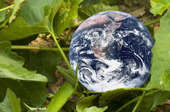 Living Planet Earth. Image of planet earth with green leaves portraying a living earth Stock Images