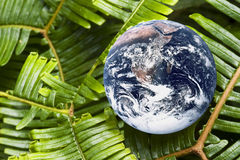 Living Planet Earth. Image of planet earth with green fern leaves portraying a living earth Royalty Free Stock Photos