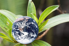 Living Planet Earth. Image of planet earth with green leaves portraying a living earth Royalty Free Stock Photography